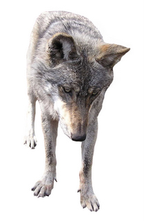 Print questions to stop print buyers acting like wolves