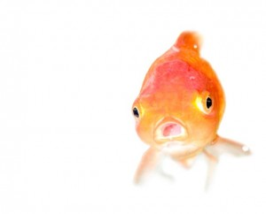 Relationship sellers can resemble goldfish